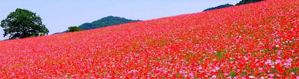 埼玉県東秩父村のパソコン出張設定サポートはWELLにお任せください。