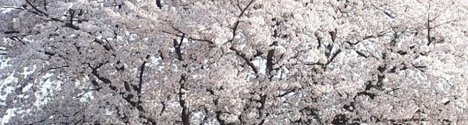 埼玉県本庄市のパソコン出張設定サポートはWELLにお任せください。