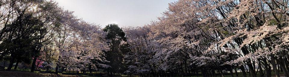 埼玉県春日部市のパソコン出張設定サポートはWELLにお任せください。