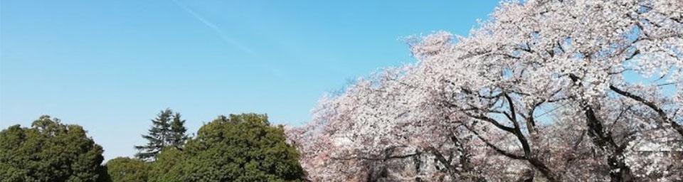 埼玉県狭山市のパソコン出張設定サポートはWELLにお任せください。